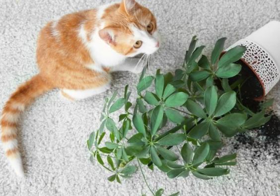 Cat near overturned house plant