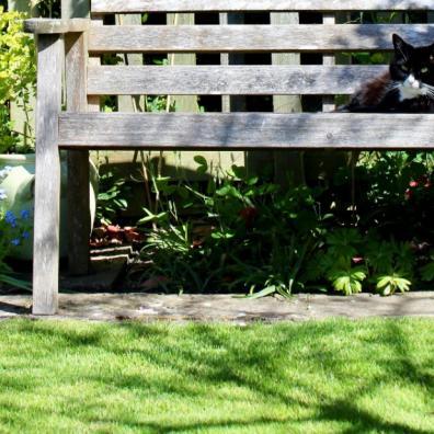 Design a garden with top tips
